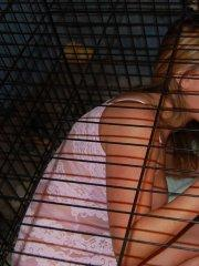 Pictures of Kelly Anderson caged up for your pleasure